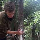 Joel Wilson inspecting a tree with signs of possum damage