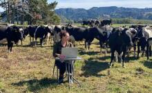 Farming tutor Rachel Nash works on her laptop among a paddock of cows during lockdown